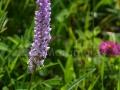0171_Orhidee