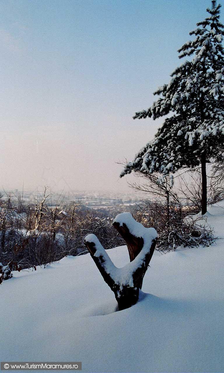 Baia-Mare_vedere-de-pe-valea-Cerbului