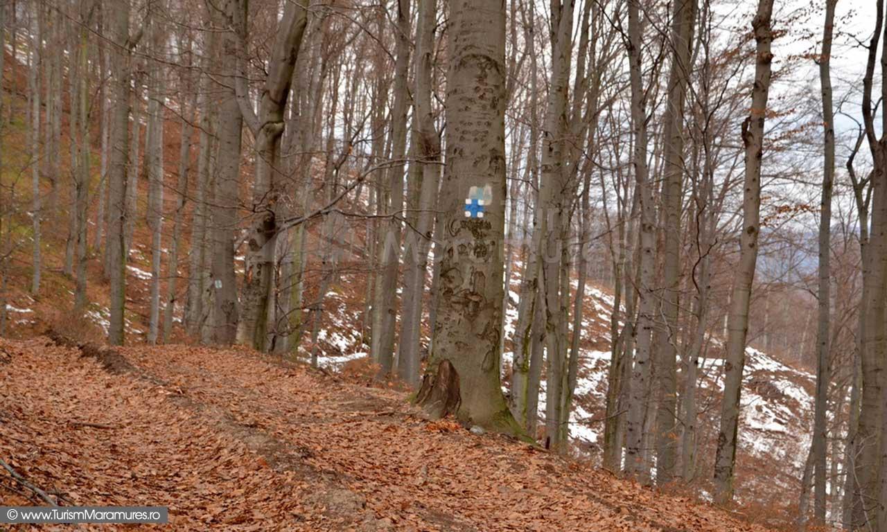 Poteca si marcaj spre varful Elena-Ferigii-Plestioara