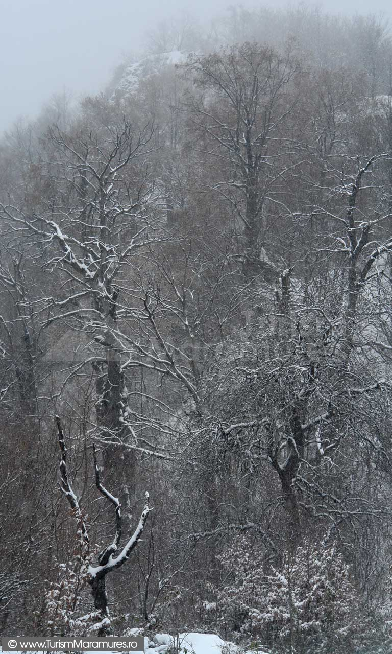 Tolvaj-Denes_Baia-Mare