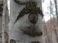 Ochi-pe-trunchi-de-copac
