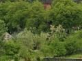 48_Biserica-de-lemn-UNESCO-Ieud