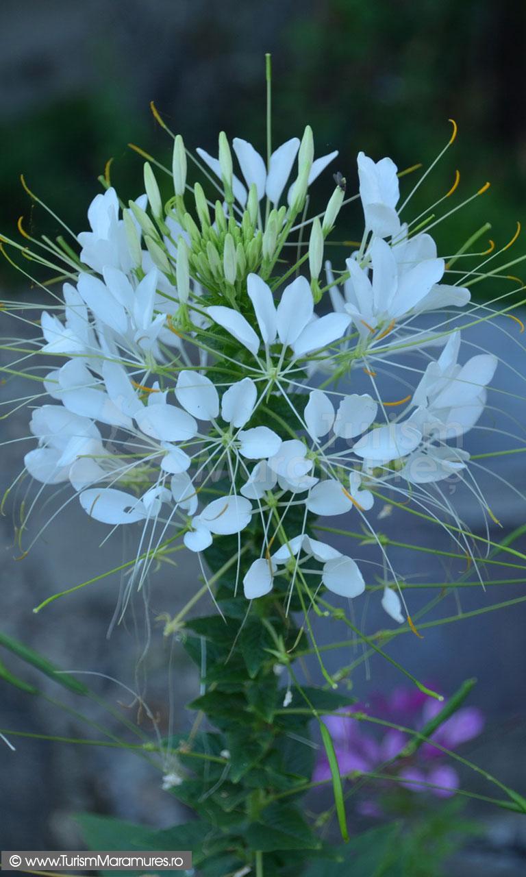 04_Floare