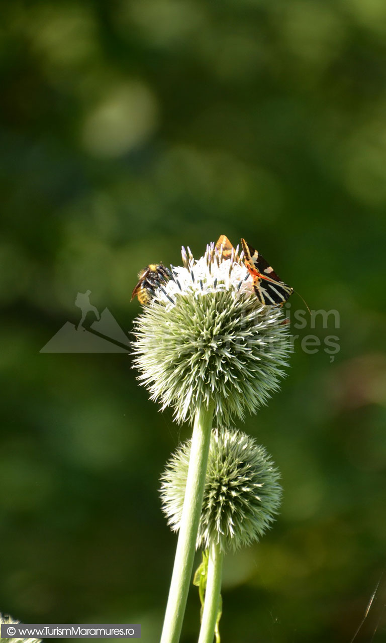 47_Hotii-de-nectar