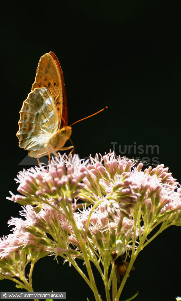 78_Fluture