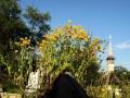10_Cimitir-Rogoz