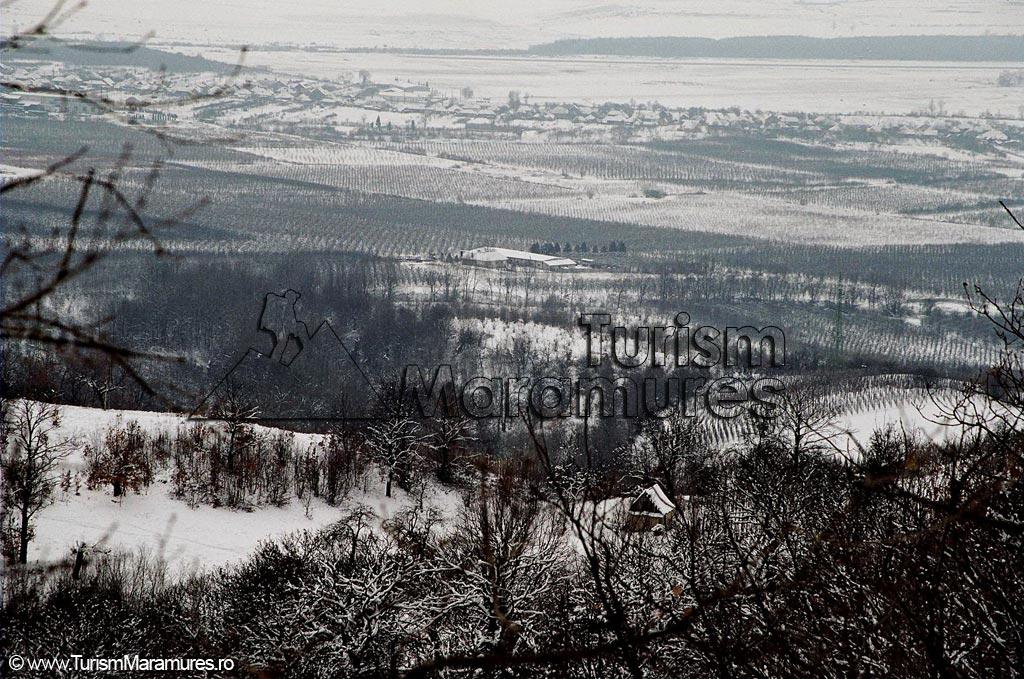 06-La-SV-de-Tighieru-Statiunea-Pomicola-Tautii-Magheraus-Berarie
