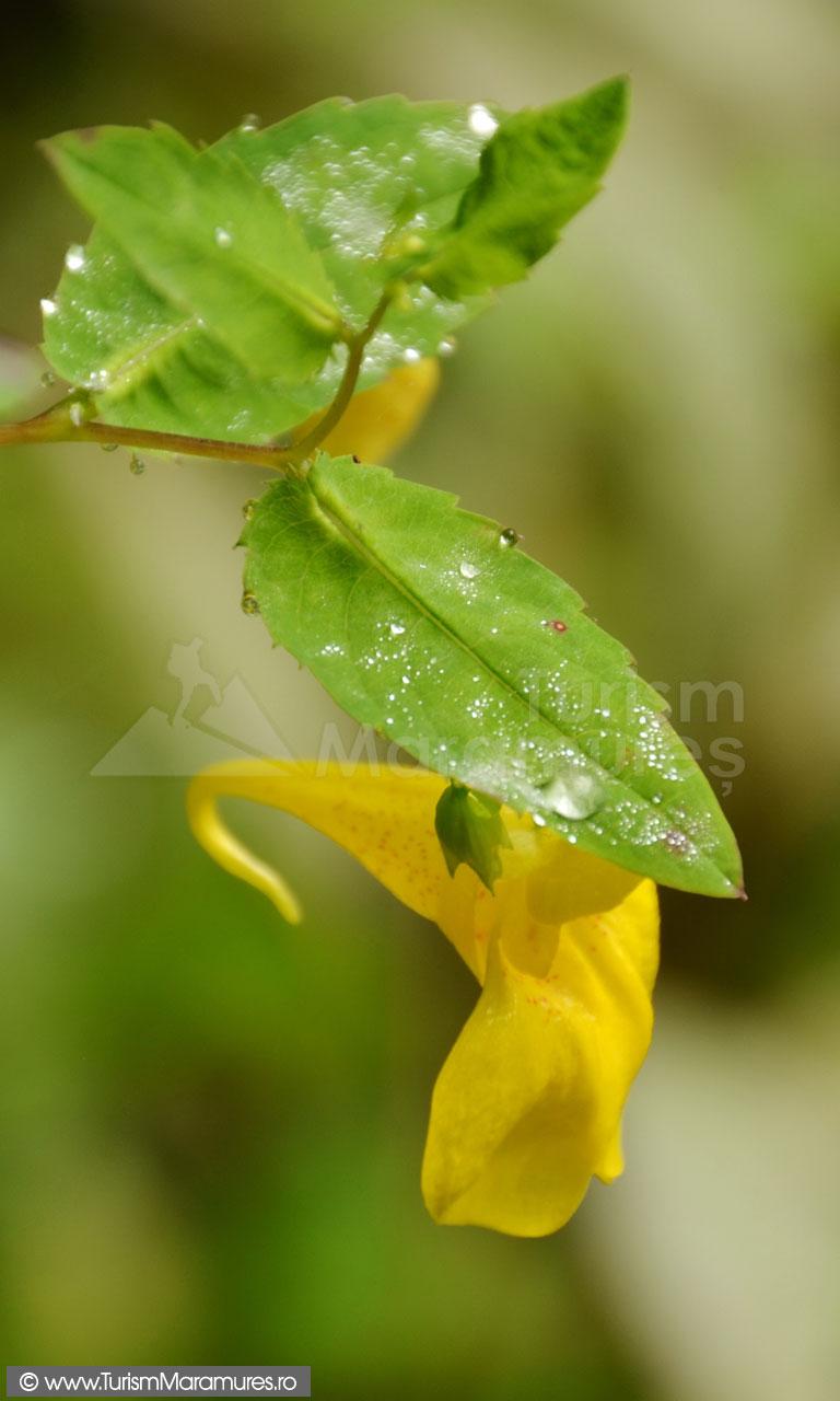 Floare_01