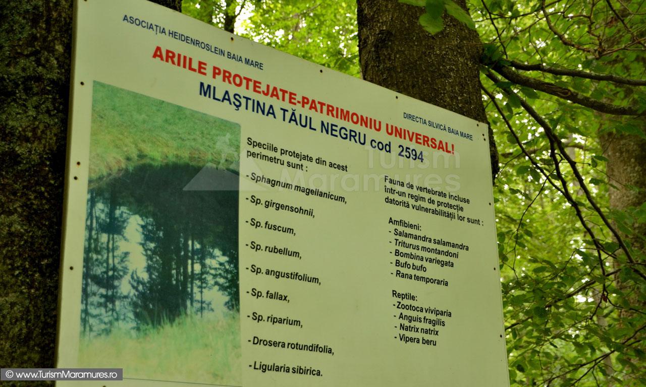 57_Panou-Taul-Negru