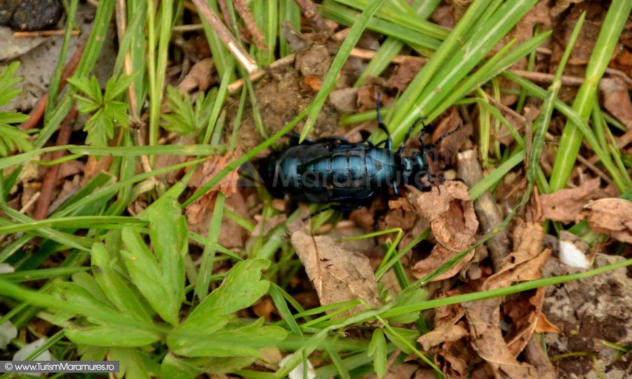 80_Sex-insecte