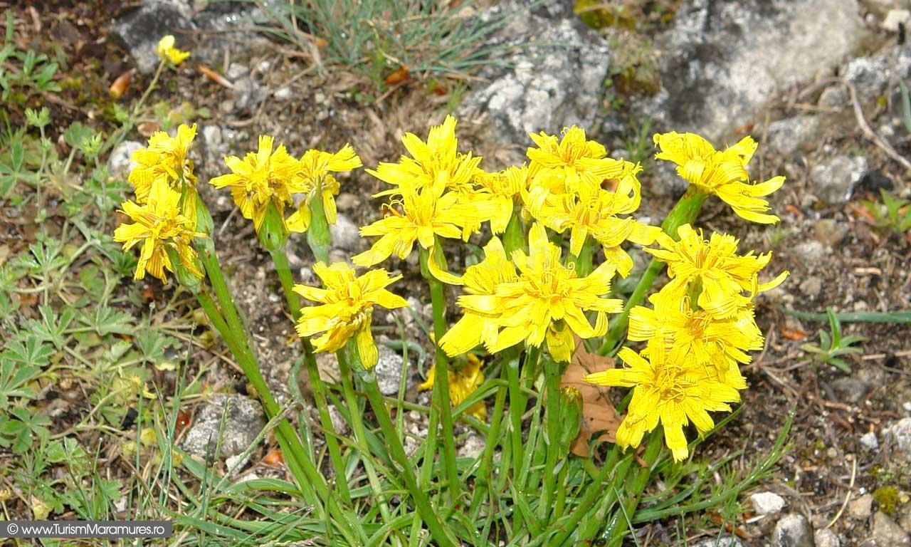 19_Flori-Custura-Cetatelei
