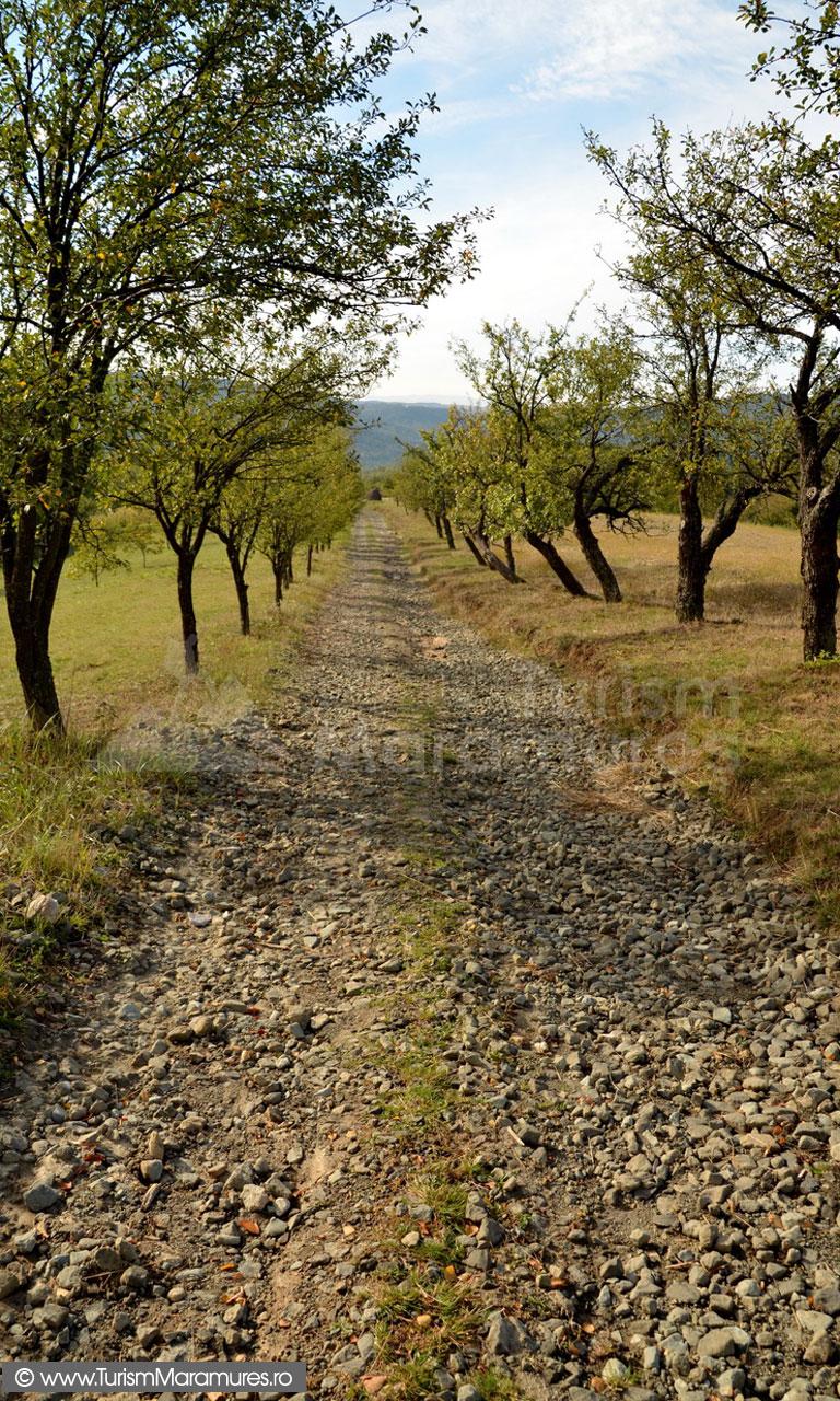 28_Drum-prin-Sahelbe-si-pruni