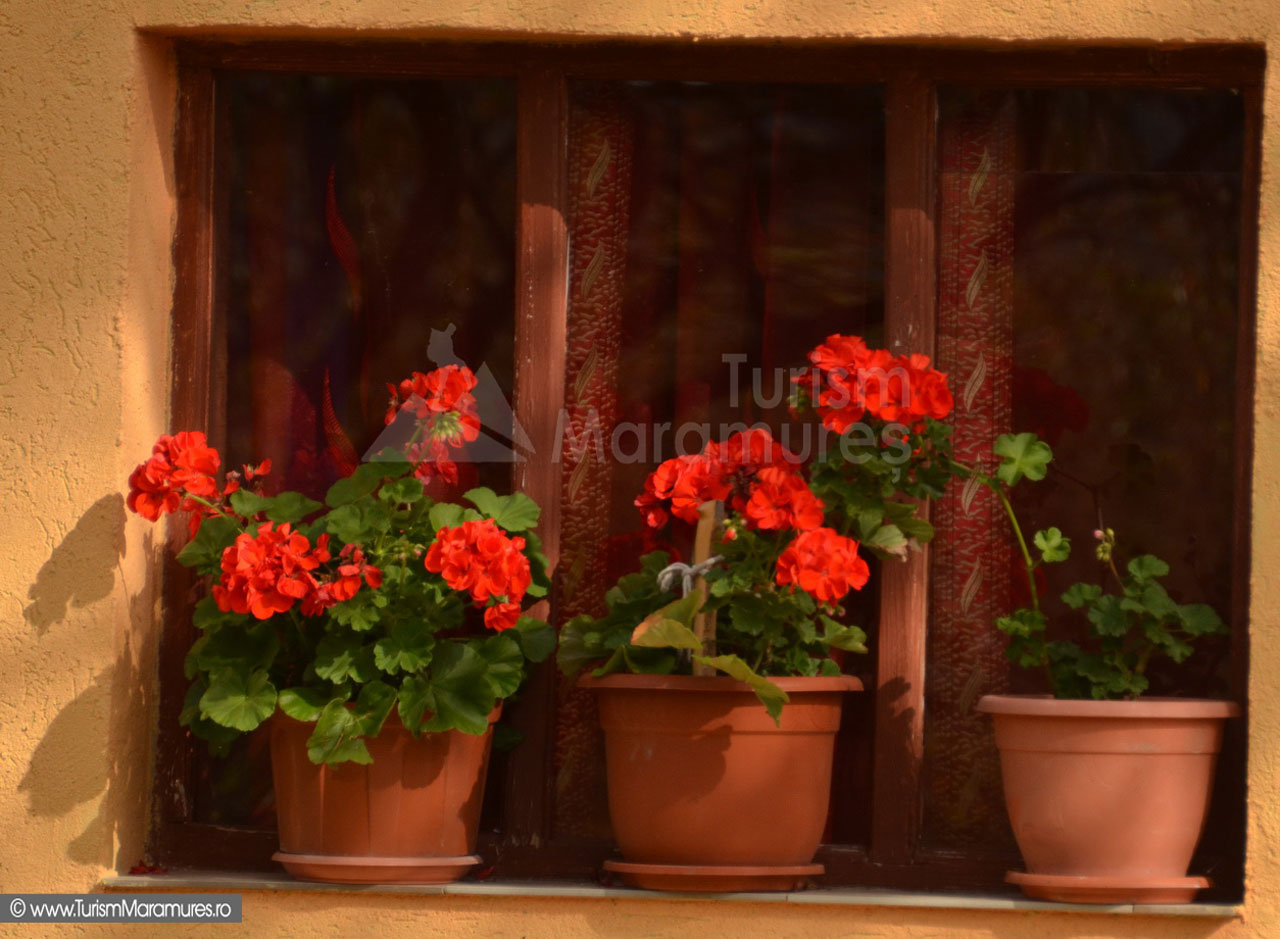 40_Fereastra-cu-muscate-rosii