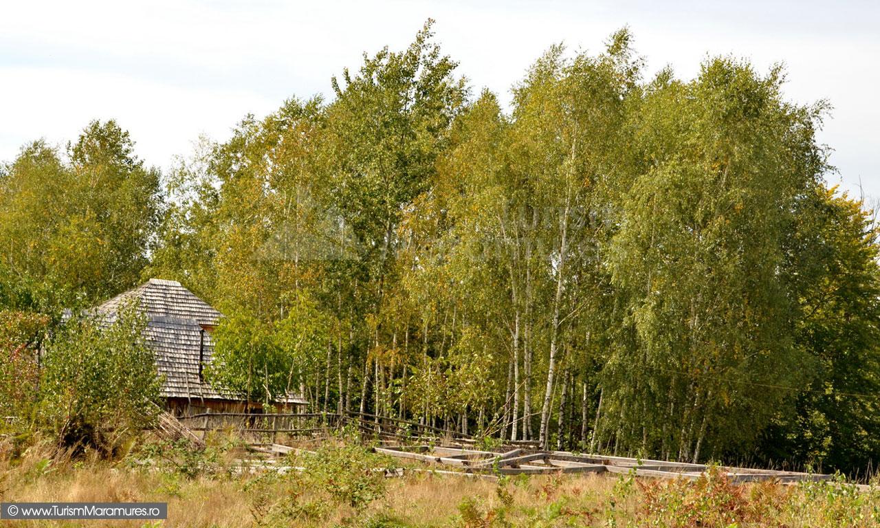 75_Pe-Dambu-Hutii-Sahelbe