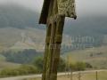 06-Troita-din-dealul-Hotarului