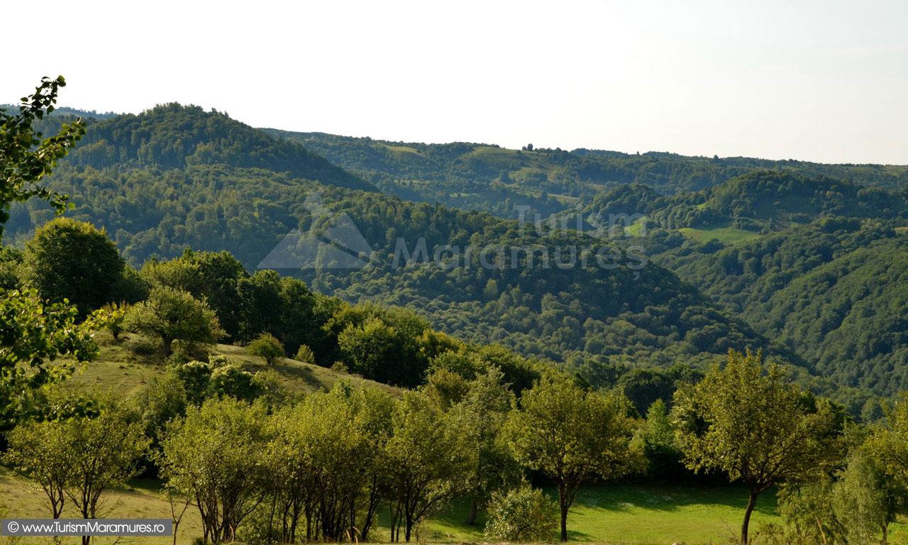 52_Dealul-Hijii_culoarul-Lapusului_dealul-Cetatii-Chioarului