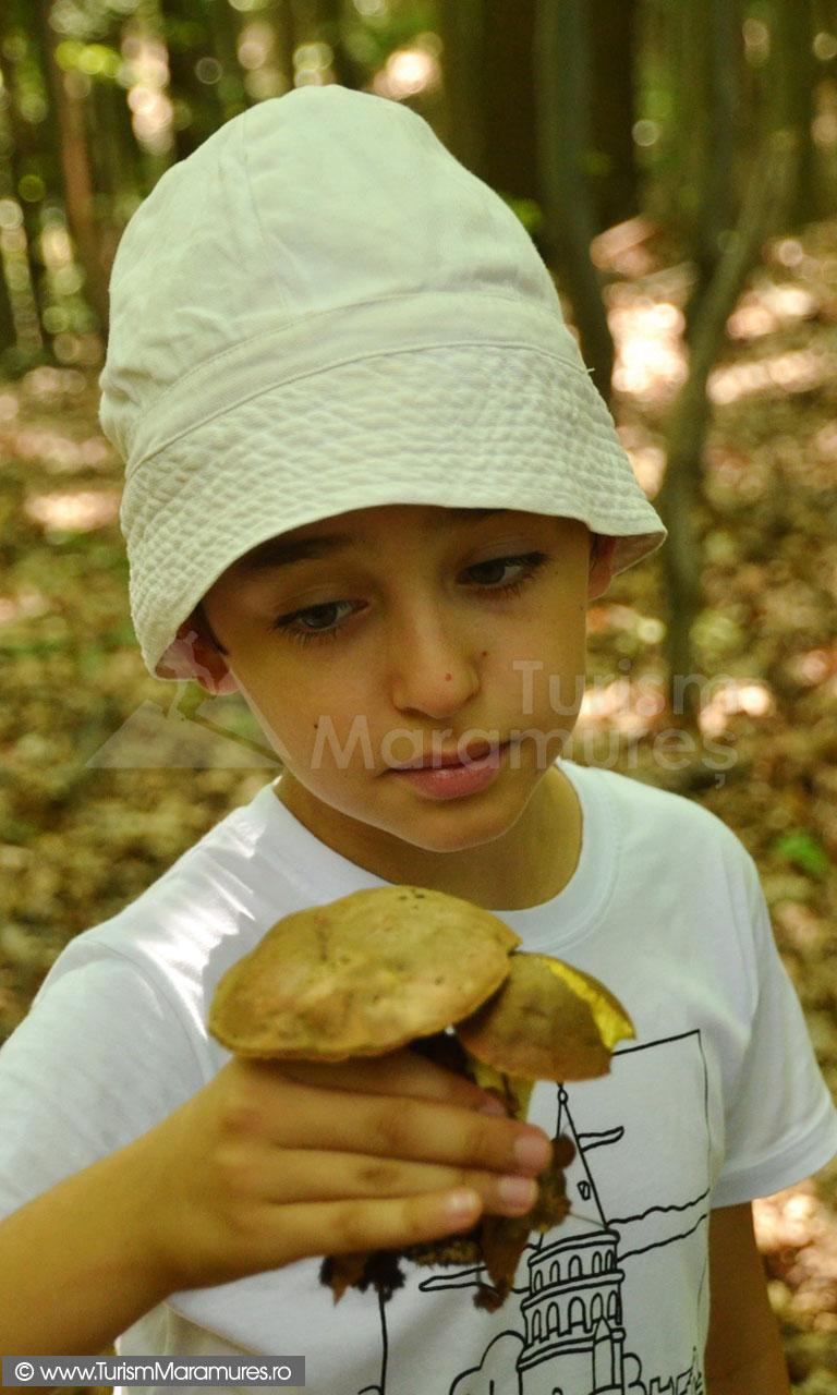 39_Radu-si-curs-de-recunoastere-ciuperci