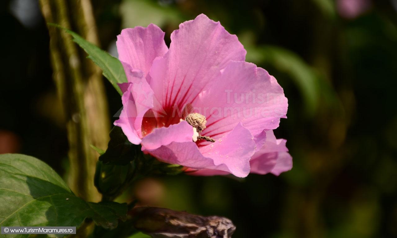 Floare_0041
