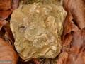 26-Detritus-litoral-cu-scoici-fosile