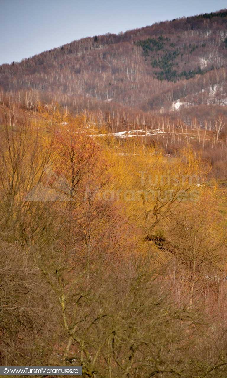 Valea Izvorul Bulzului Maramures