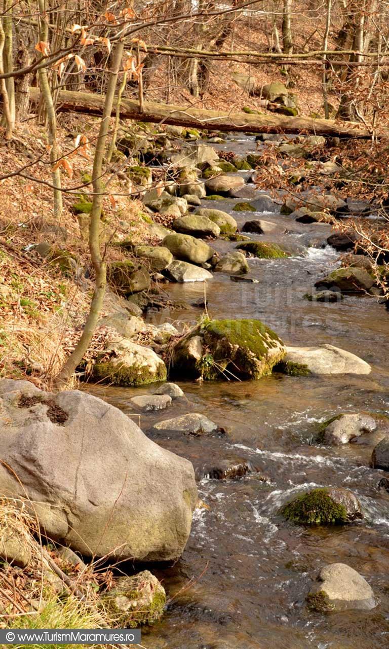 Valea Izvorul Bulzului Maramures_03