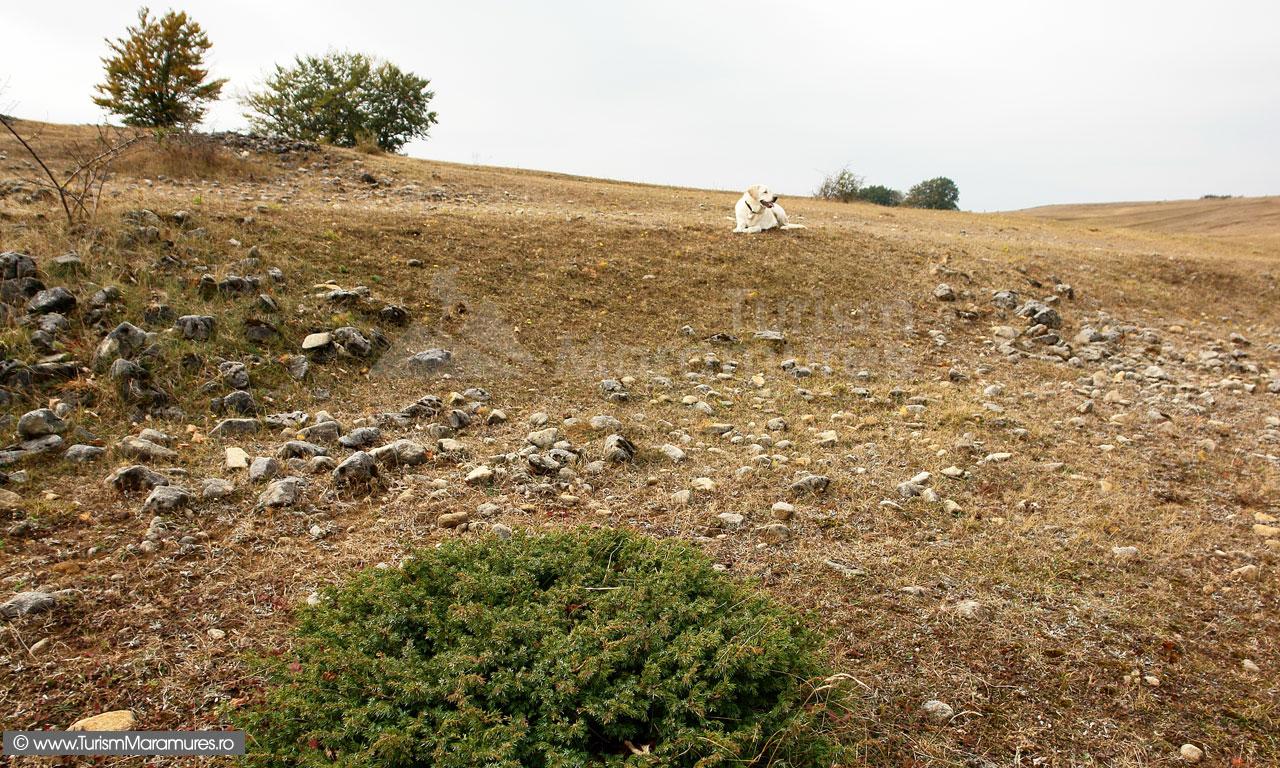 14_Culmea-Preluca-pajistea-cu-dolomite