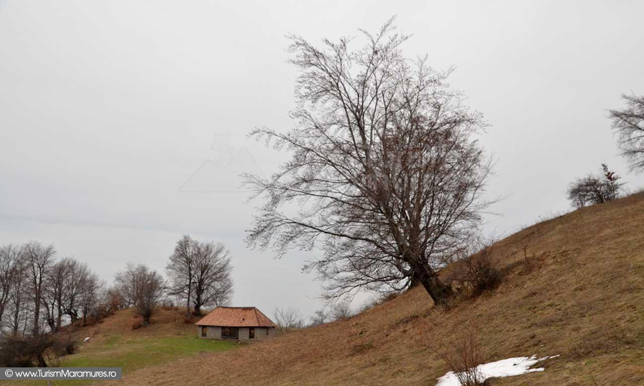Casoaia de pe Dealul Crucii SE