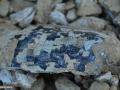 06-fosile