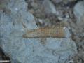 12-fosile