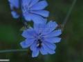 16-floare