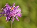 18-floare