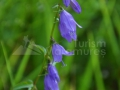 19-floare
