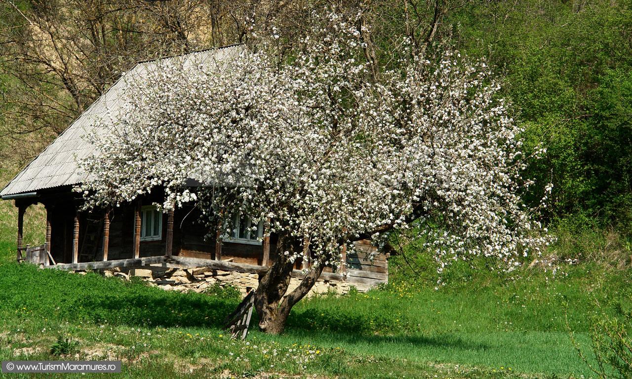 23Maramuresul-Istoric_Casa-traditionala