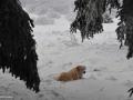 30-Labrador-Brena