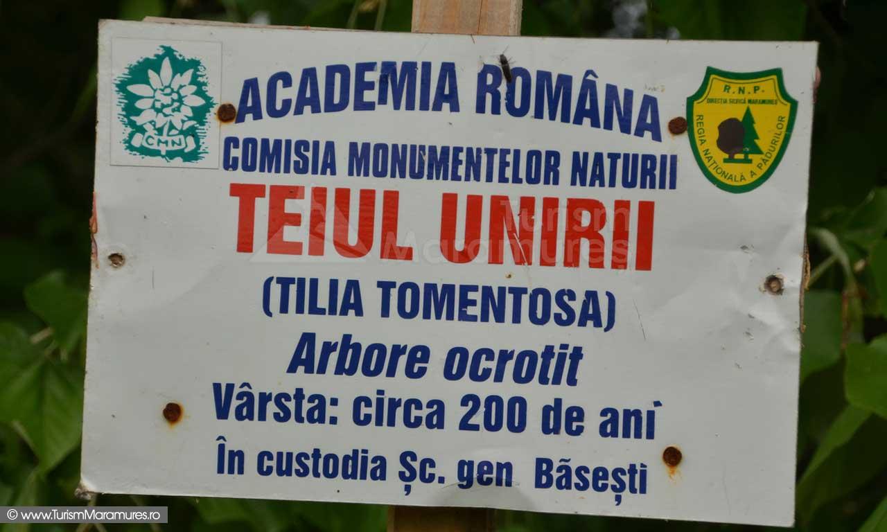 22_Teiul-Unirii-Basesti