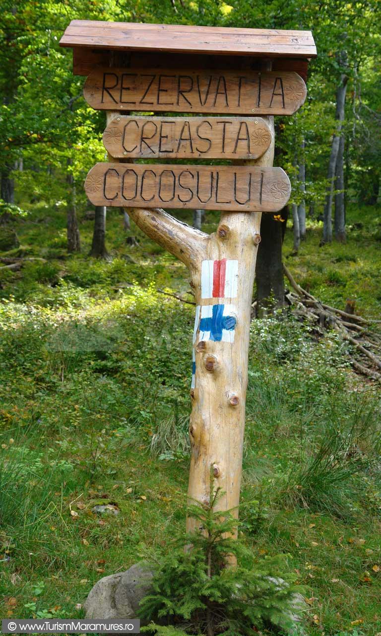 Rezervatia-Creasta-Cocosului