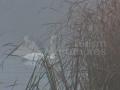 21-Pescaria-Arinis-lebeda