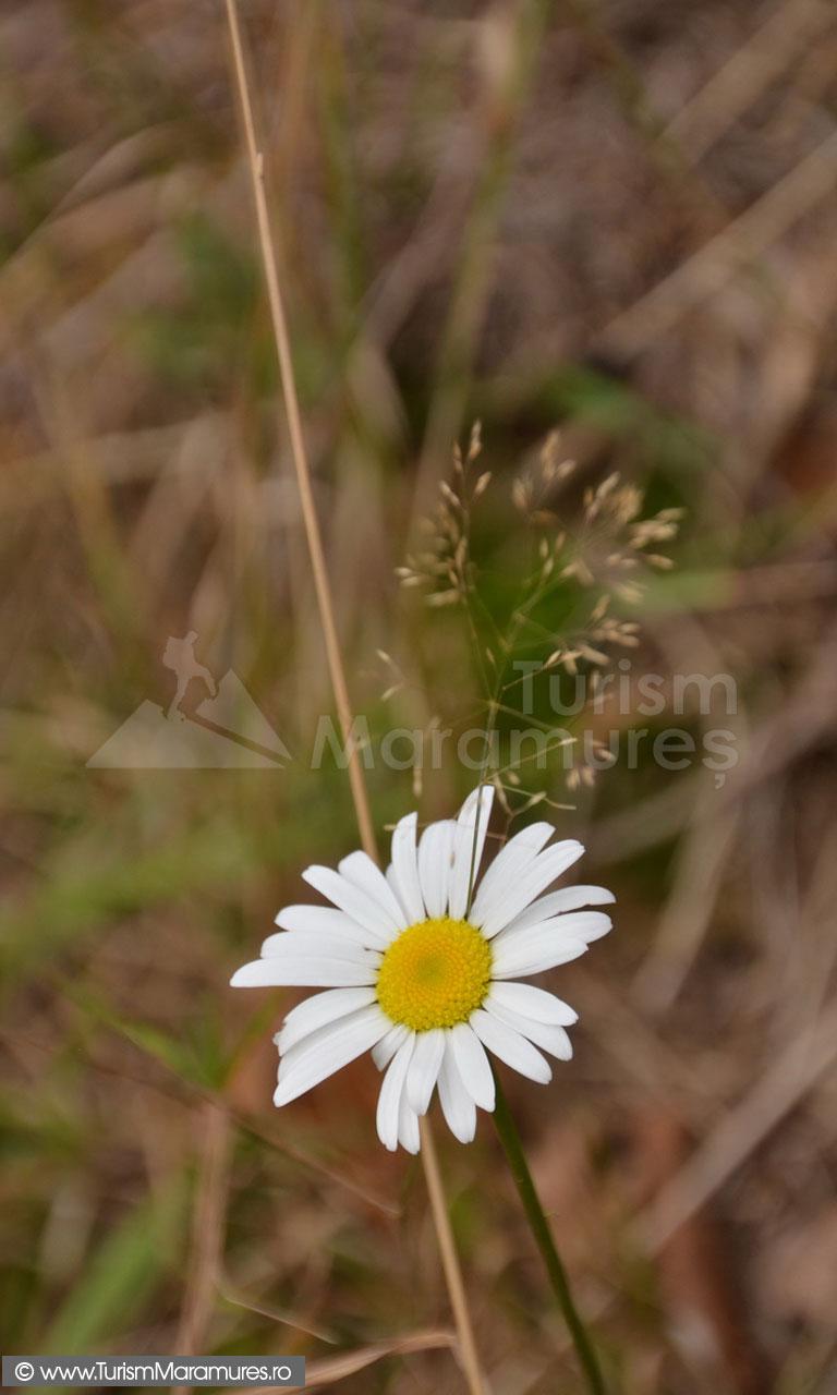 72_Floare
