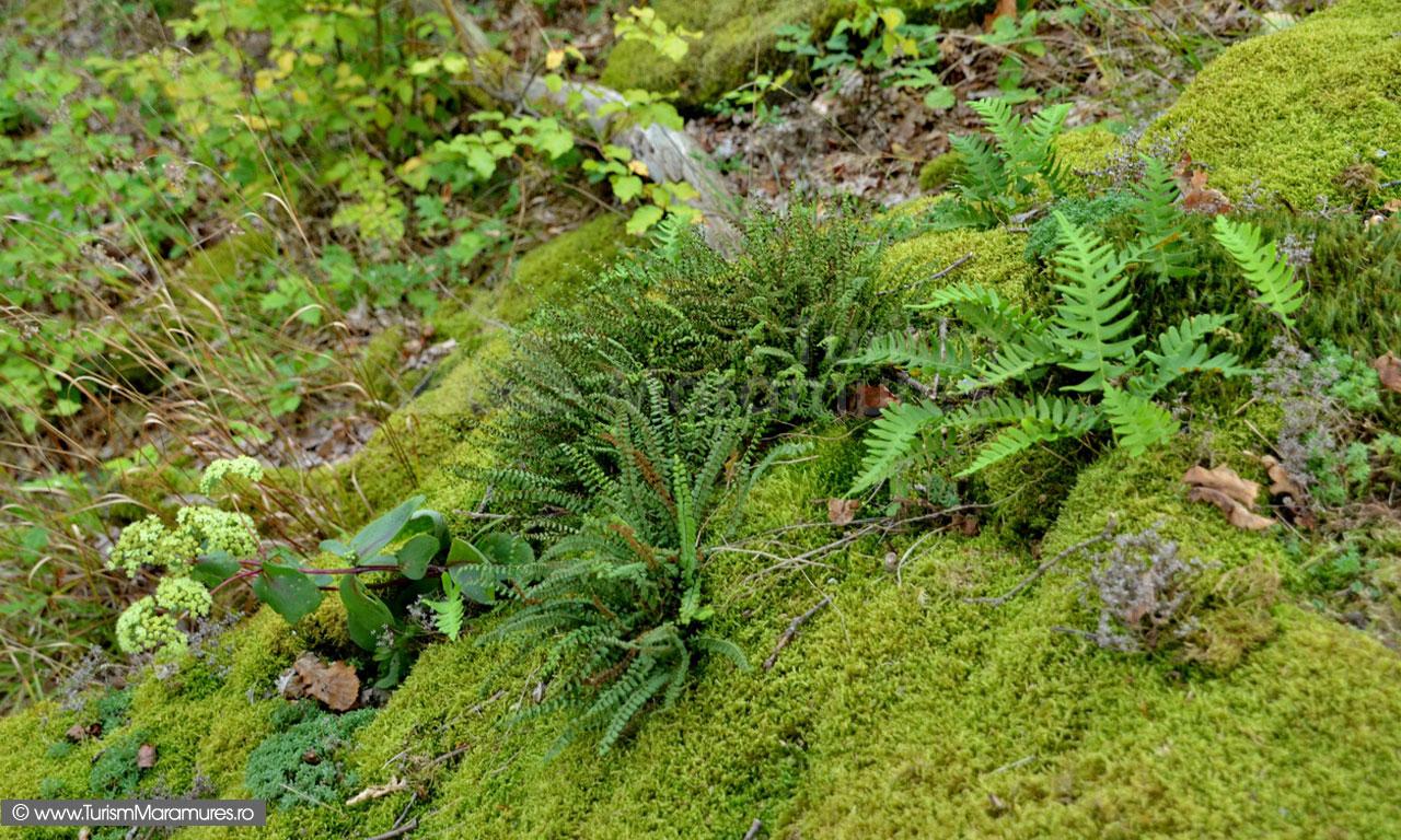 55_Sisturi-si-vegetatie-la-Piatra-Soimului