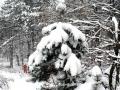 08-iarna-padure