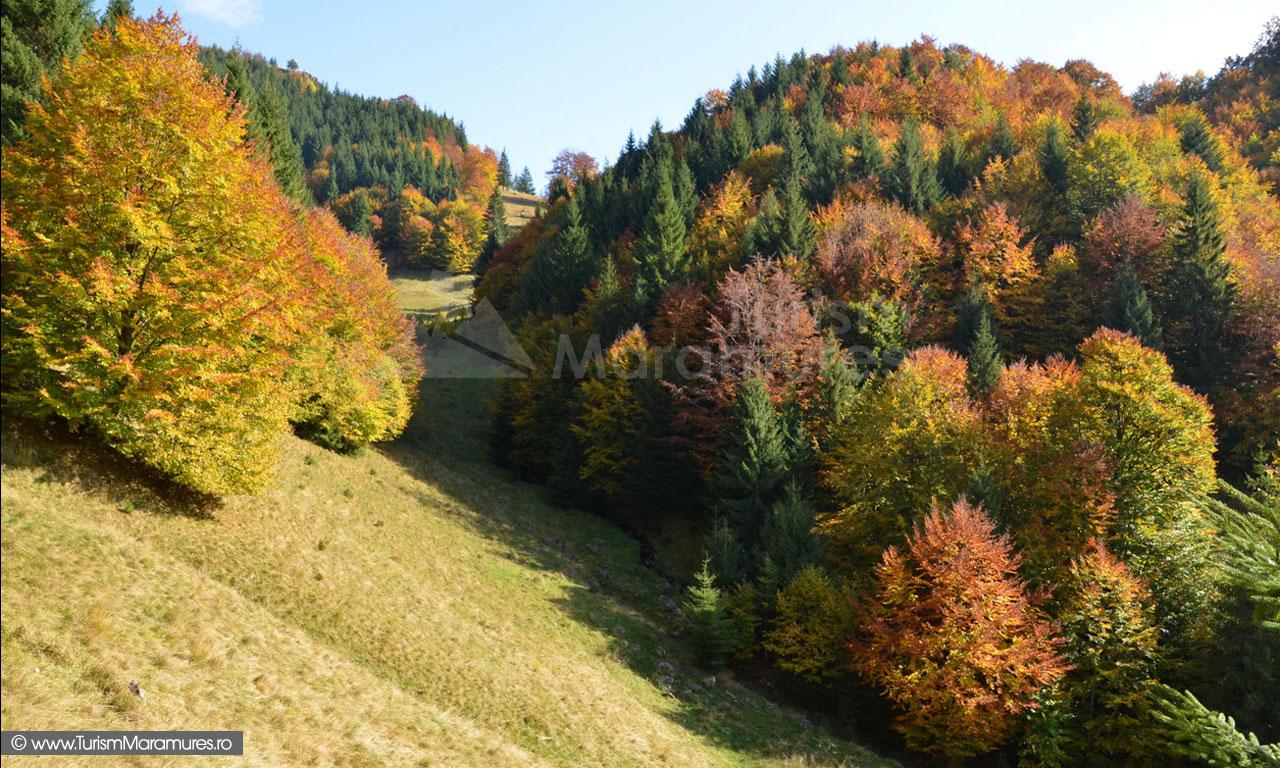 77_Valea-Izvorul-Negru-Maramures