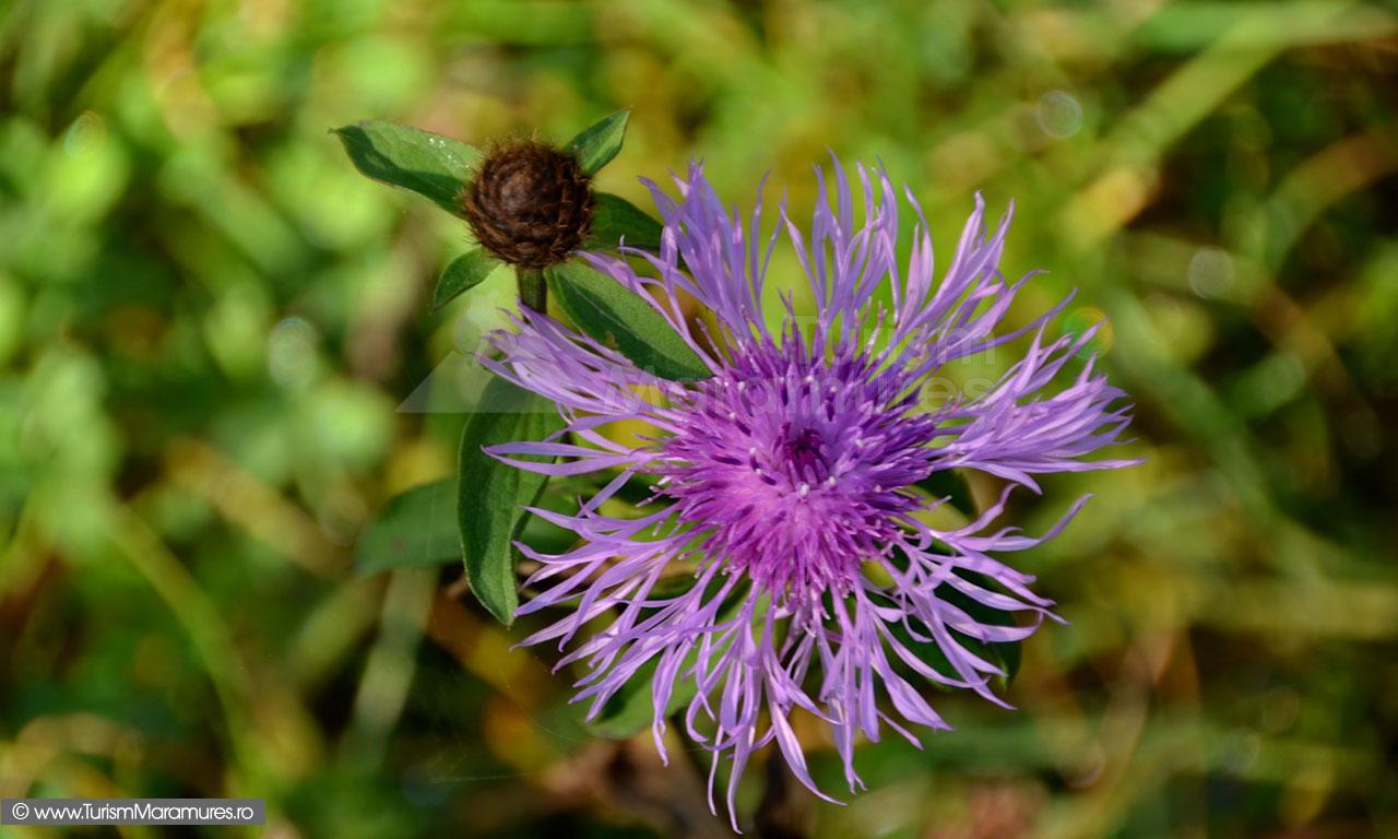 95_Floare