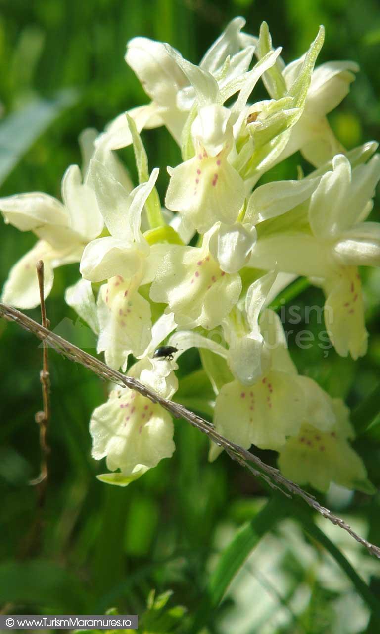 02_Orhidee