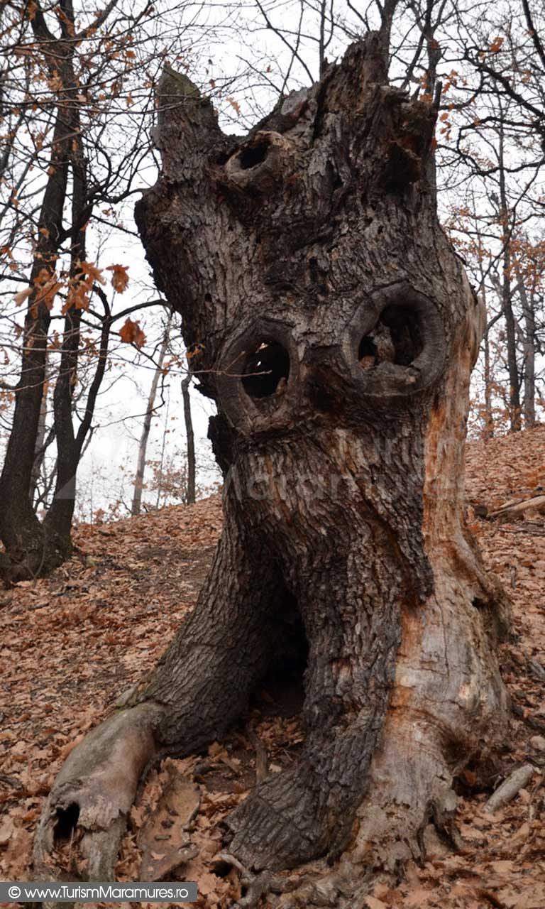 Copac traznit