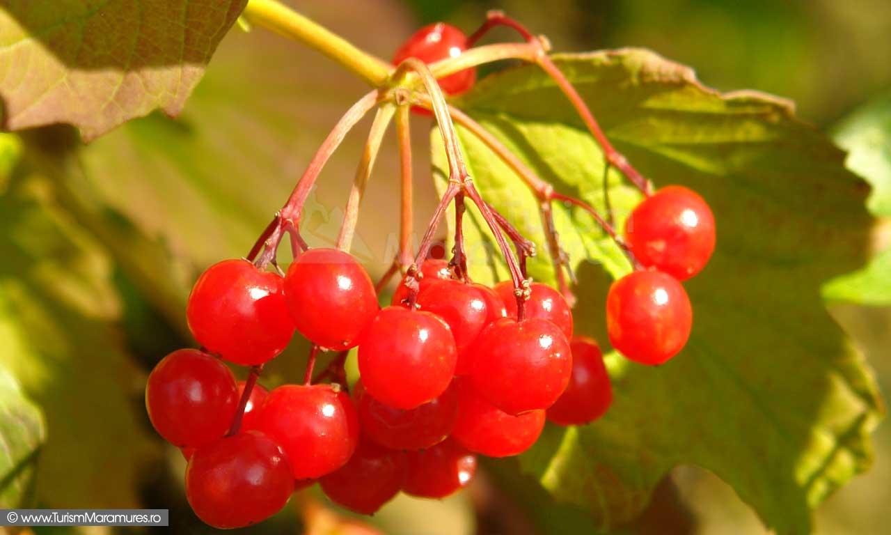 Fructe-de-calin