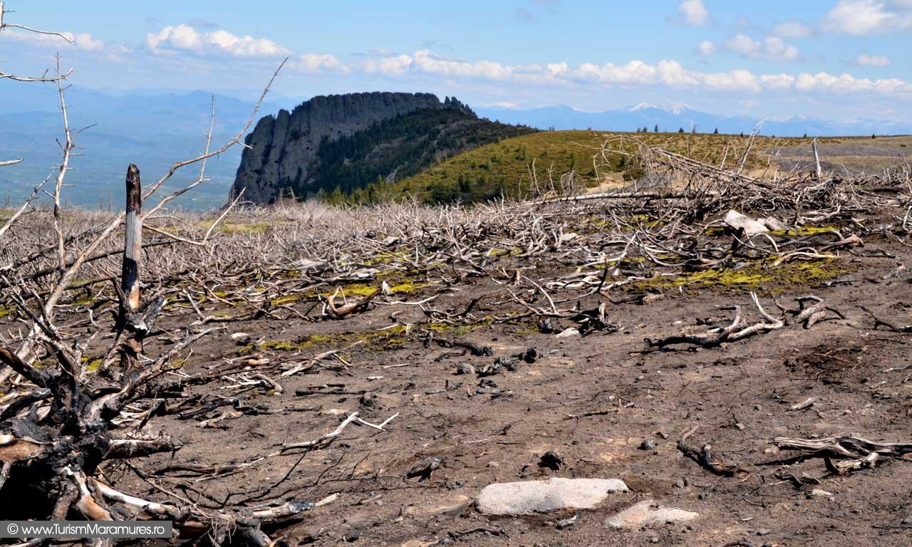 Eco-dezastru-Secatura