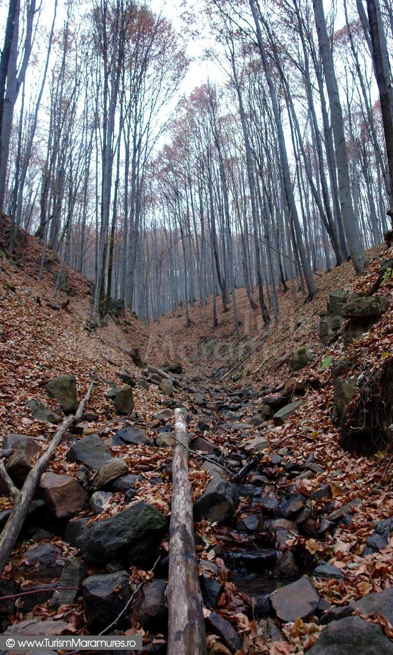 Valea Cicarlaului Maramures