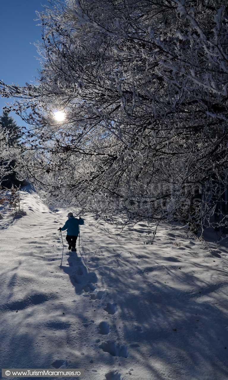Iarna-Muntii-Ignis-Maramures