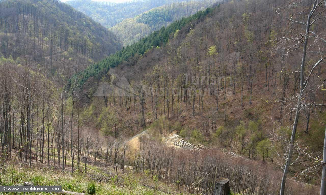 Valea-Lunga