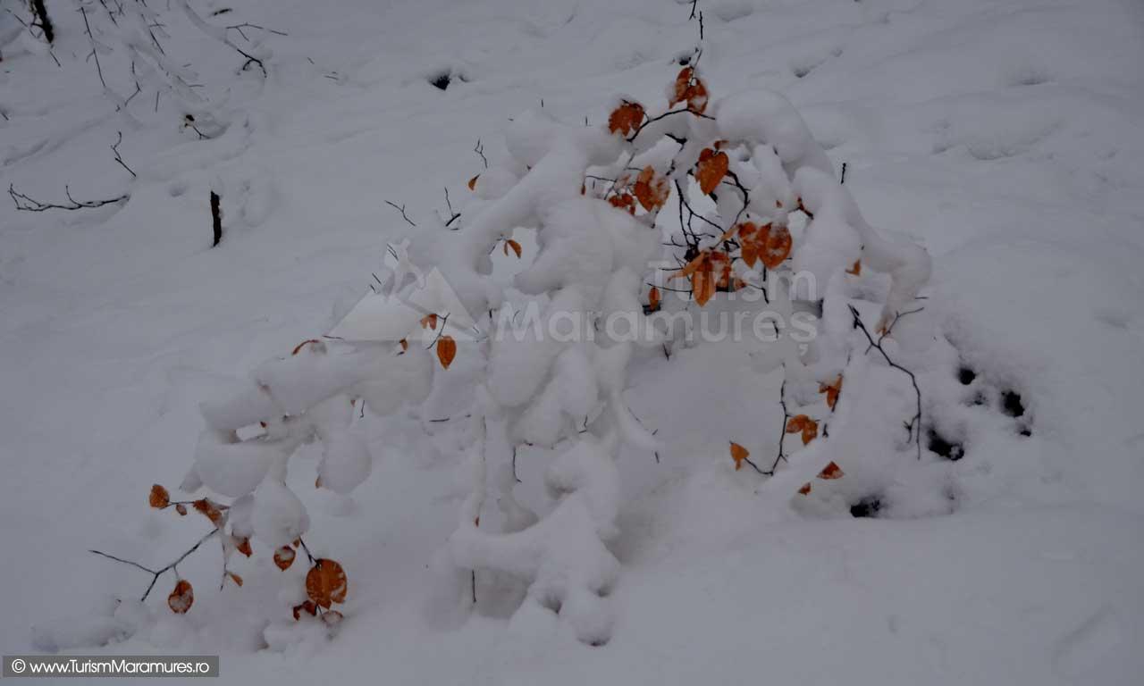 Imagini-de-iarna-Maramures_03